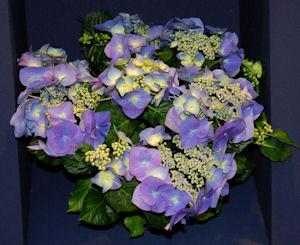 Photo: Tesselaar Plants