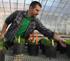 Alec Kowalewski, OSU's new turf specialist, reaches for a pot of creeping bentgrass. (Photo by Tiffany Woods)