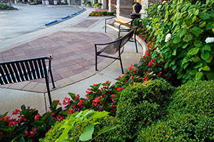 A pleasant stroll. All shrubs are hand pruned so shoppers may enjoy the sitting areas. The hardscapes are checked each season and leveled to prevent tripping hazards. Photo: Linda Oyama Bryan