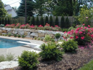 Landscape Concepts offers clients free plant replacements up to 30 days after an installation.