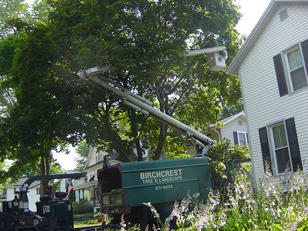 Cross-training employees among departments gives Birchcrest Tree & Landscape options.