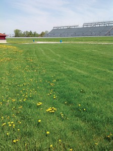 A look at untreated turf vs. turf treated with Dow Defendor  specialty herbicide.   PHOTO: Dow AgroSciences