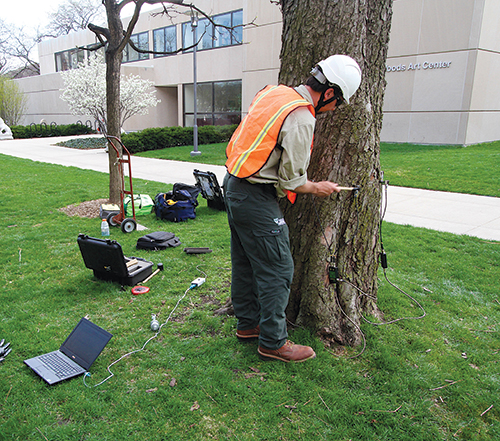 Another device in Bartlett's toolbox is sonic tomography, which it uses to see if tree trunks are rotten or hollow.