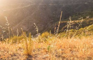 iS46636828_california-drought