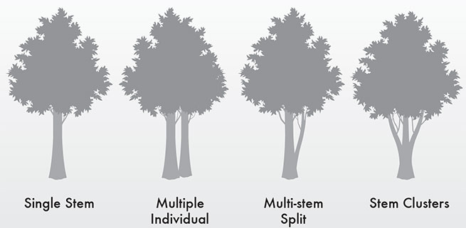 Source: The Tree Geek, thetreegeek.com