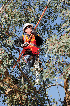 Among the educational offers Desert Classic covers is certified arborist training.