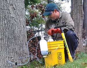 Treating trees with fertilizers and control products is one portion of Piscataqua Landscaping's tree work.