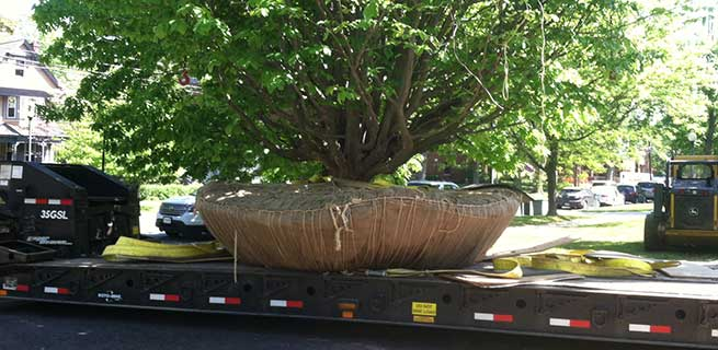 Moving trees proves profitable for one landscape company