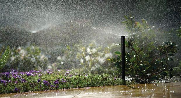 Photo: Rain Bird