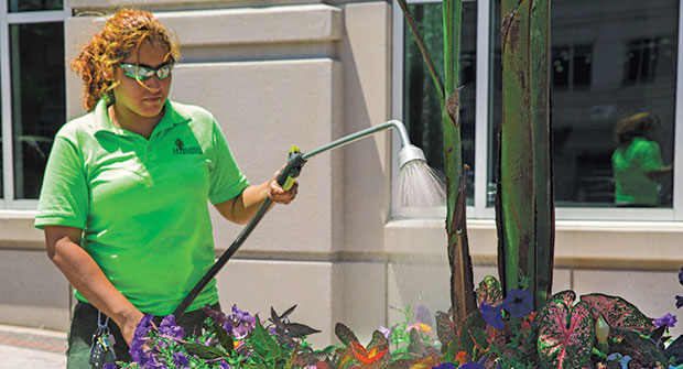 Photo: Level Green Landscaping