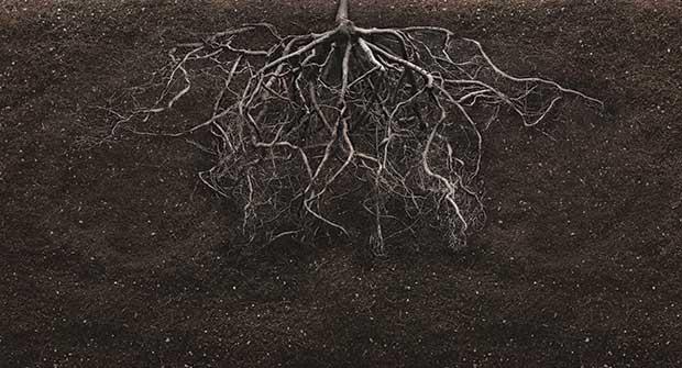 roots. Photo: iStock.com/MARIOS07