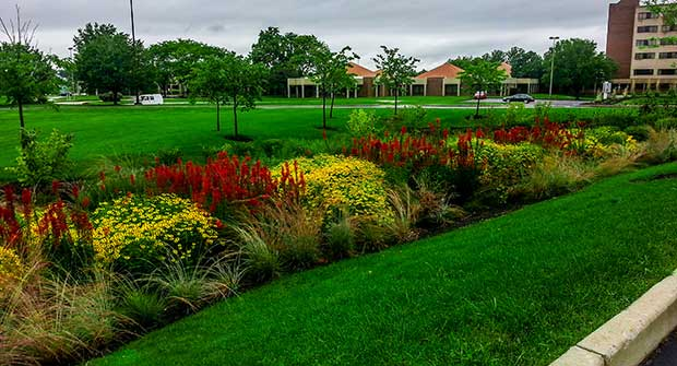 Bioretention area. Photo: Bluegrass Landscape & Snow Management