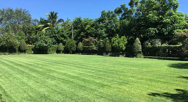 green lawn. Photo: Plant Health Care Systems of South Florida