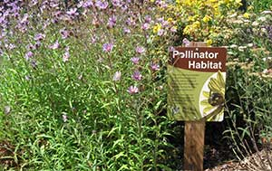 Pollinator habitat (Photo: Matthew Shepherd, The Xerces Society)