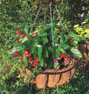 Hanging basket (Photo: Color Burst Landscapes)
