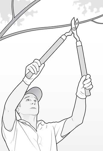 Man trimming trees (illustration: David Preiss)