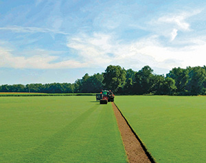 Loving's sod farm (Photo: Loving)