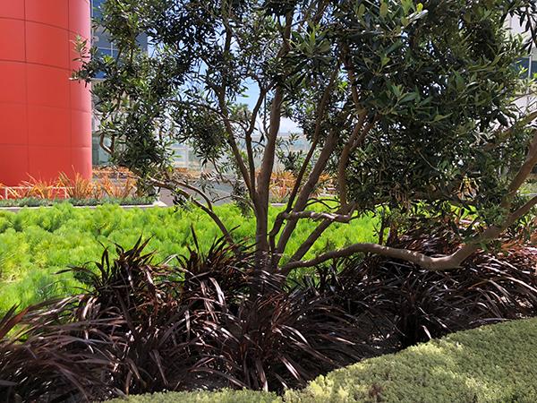 Plants around PCT property (Photo: LandCare)