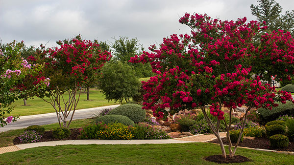 Color plantings at Blue Skies of Texas (Photo: Clean Scapes)