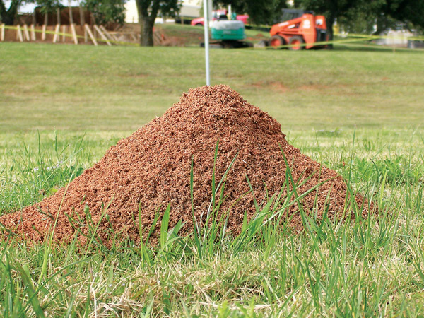 fire ants (Photo: Bayer)