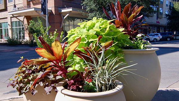 Planter at The Domain (Photo: Greg Yount, Native Land Design)