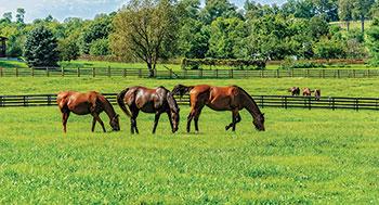 Horse pasture (Photo: iStock.com/Bear2016)