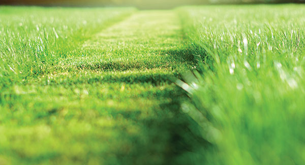 Strip of mowed grass (Photo: iStock.com/undefined undefined)