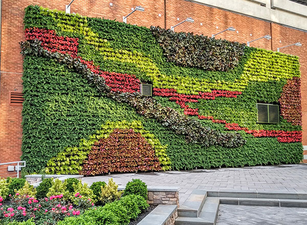 Green wall installation (Photo: Raimondi Horticultural Group)