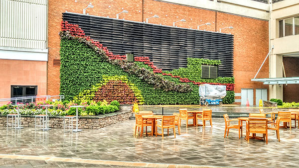 Green wall (Photo: Raimondi Horticultural Group)