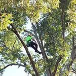 Photo: Davey Tree Expert Co.