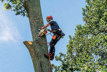 Chainsaw operator at work (Photo: Aspen Tree Expert Co.)