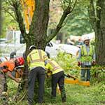Photo: The Davey Tree Expert Company