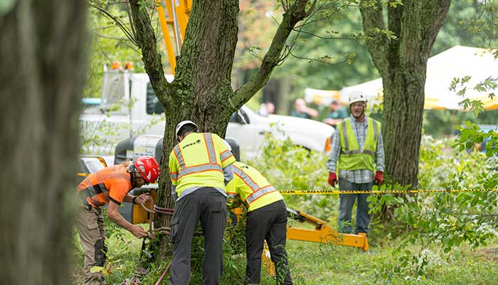 Photo: The Davey Tree Expert Company