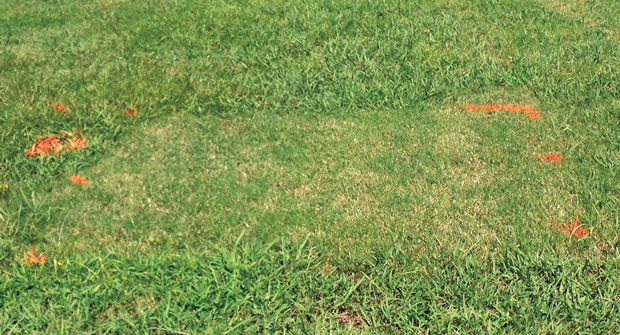 Controlling dallisgrass typically doesn't happen within one or two herbicide applications. Photo: Bayer