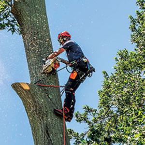 Photo: Aspen Tree Expert Co.