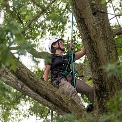 Alex Julius climbs a tree. (Photo courtesy of Davey Tree Expert Co.)
