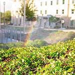 Photo: Andy's Sprinkler, Drainage & Lighting