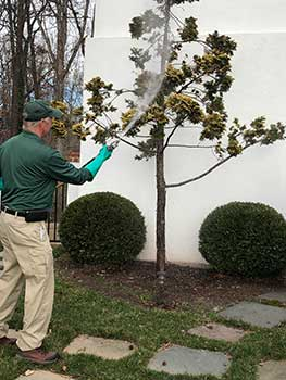 Technician spraying tree (Photo: Virginia Green Lawn Care)
