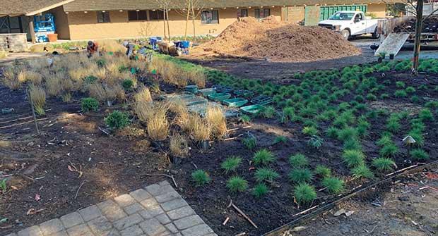 Irrigation renovation project (Photo: Gachina Landscape Management)