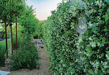 Fertigated plants (Photo: VIP Landscaping)