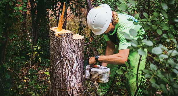 Person taking care of tree stump (Photo: Timberline Landscaping)