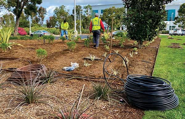 Irrigation project (Photo: Michael Derewenko, Jain Irrigation)
