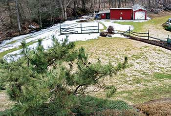Snow mold damage on lawn (Photo: Grasshopper Lawns)