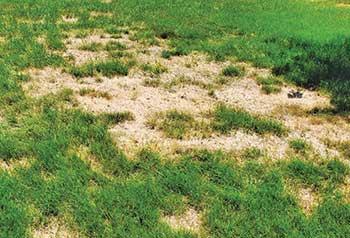 Photo: Green Lawn Fertilizing