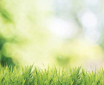 Healthy turf (Photo: Shuttertop/iStock / Getty Images Plus/Getty Images)
