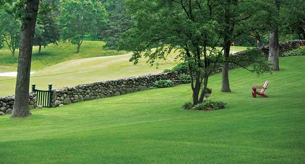 Green lawn (Photo: BioLawn)
