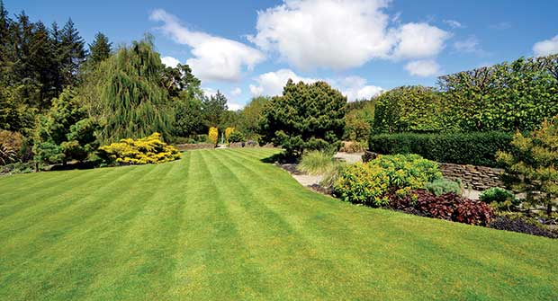 Green lawn (Photo: dpe123/iStock / Getty Images Plus/Getty Images)