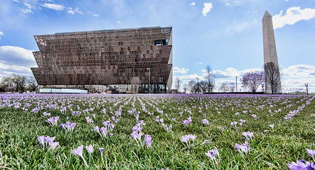 Irrigation project at NMAAHC (Photo: Michael Barnes)