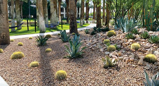 Xeriscape plantings (Photo: Steve Swanson)