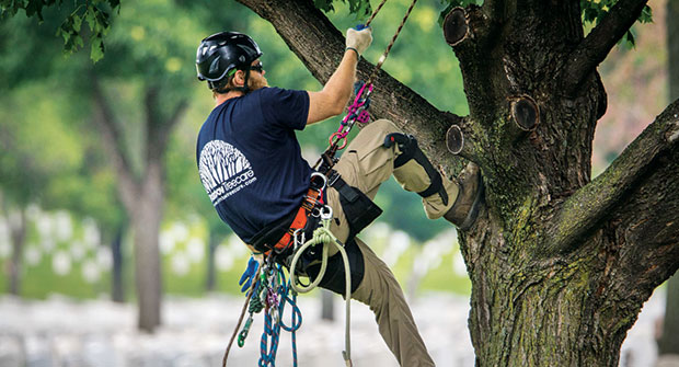 Rainbow Treecare employee climbing tree (Photo: Rainbow Treecare)